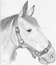Cool Horse Drawings