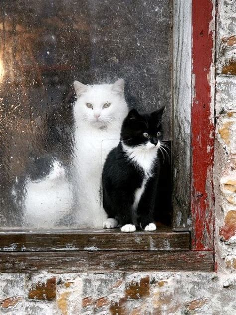 kittens  barn window pictures   images