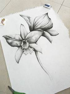 Pencil Drawings Orchids | www.imgkid.com - The Image Kid ...