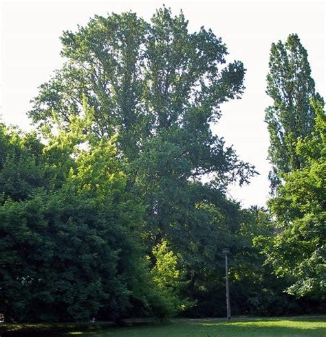 Botanischer Garten Berlin Erfahrung by Mein Eigener Botanischer Garten Baumkunde Forum