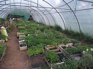 Faire Germer Des Graines De Poivrons : tomates sans arrosage ni pesticide cette m thode fascine les biologistes ~ Melissatoandfro.com Idées de Décoration