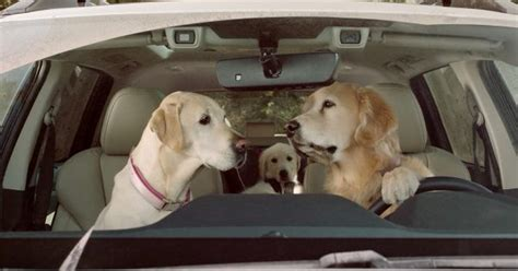 Subaru's Doggie Drivers Are Back, And Just Rollin' Along