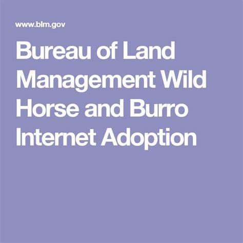 am agement bureaux 11 best donkeys mules and burros images on