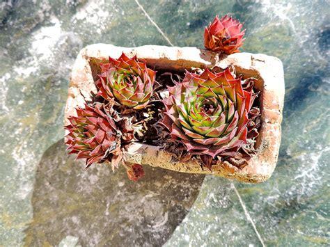 รูปภาพฟรี: แคคตัส, กระถางดอกไม้, หินอ่อน, ธรรมชาติ, ตกแต่ง, ดอกไม้, ใบไม้, ฤดูร้อน