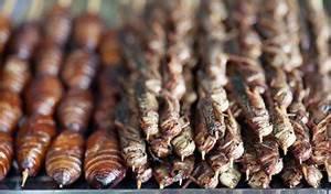 Hausmittel Gegen Spinnmilben : hausmittel gegen ameisen so entfernt man sie aus dem garten ~ Whattoseeinmadrid.com Haus und Dekorationen