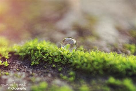 micro plants   honestheart  deviantart