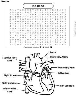 human body systems word search  heart  circulatory