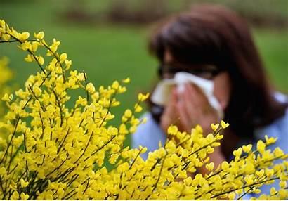 Allergy Season Pollen Sneezing Flowers Bad Earlier