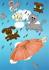 raining cats and dogs selcouth me febrero 2014