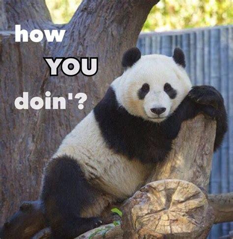 Panda Memes - funny panda memes