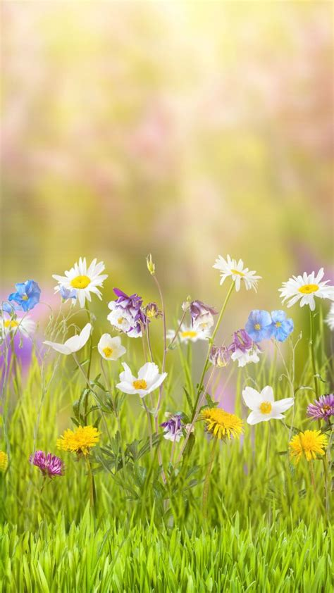 Primavera 4k Wallpapers by обои цветы 5k 4k поле весна Flower 5k 4k Wallpaper
