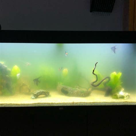 wie lange brütet eine amsel aquarium wie lange dauert eine bakterien bl 252 te in der