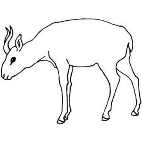 antelope  small horns coloring page