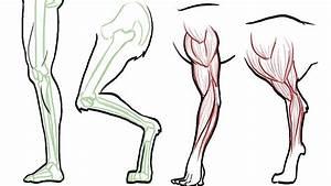 Animal Thigh Bone