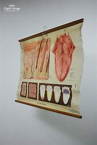 Adam And Size Chart Adam Rouilly Medical Chart Skin And Tongue