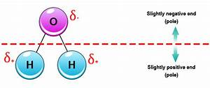 What Are Some Examples Of A Polarized Molecule
