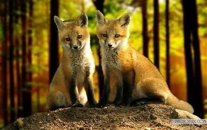 Fox Desktop Wallpapers Bing Backgrounds Computer Deer