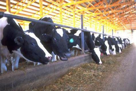 nutrition extension dairy species animal sciences