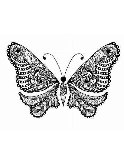 Coloring Animals Adults Pages Animal Butterfly Adult