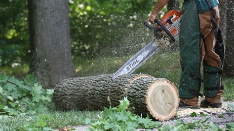 Should You Remove That Tree? 4 Ways To Tell