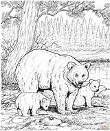 Bear American Coloring Pages Printable Bears Grizzly Adult Animals Adults Cub Hard African Supercoloring Holding Snow sketch template