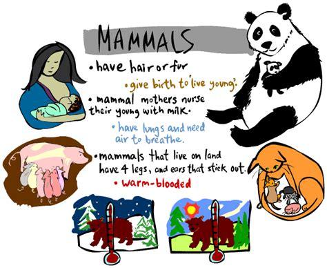 Kid's Corner Mammal Page