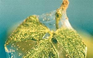 Spinnmilben An Gurken : gartenblog spinnmilben bek mpfen tipps und tricks f r ~ Lizthompson.info Haus und Dekorationen