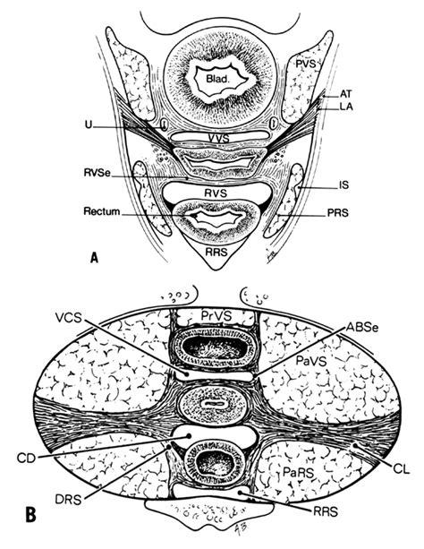 100 muscles of the pelvic floor in female pelvic