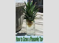 Quiet CornerHow to Grow a Pineapple Top Quiet Corner