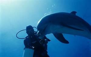 Dolphin wallpaper - 51247