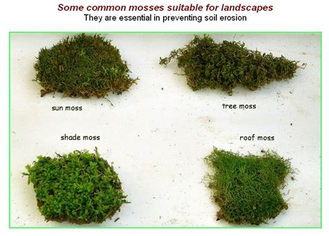 types of moss on trees moss types google search moss garden pinterest moss garden air plants and gardens