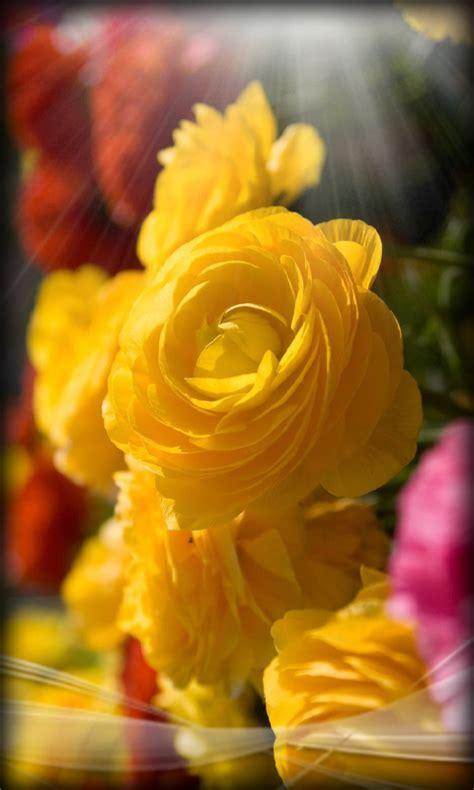 flower wallpaper gallery