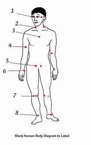 Name The Pulso Points On The Body Quiz