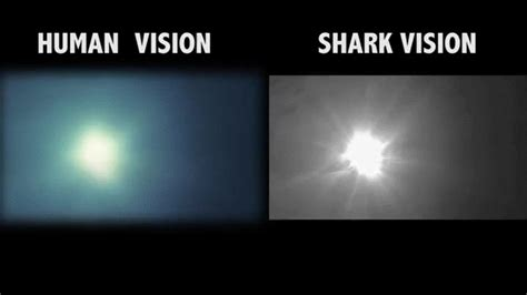 can sharks see color how animals see the world