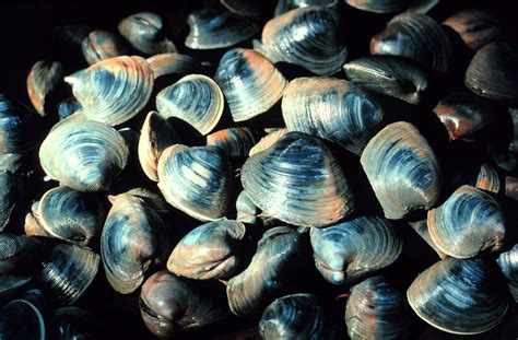 seafood species highly vulnerable  climate change