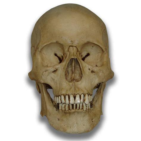 rubber o rings human skull models gorey details edward gorey tim