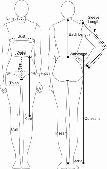 Measurements Chart Sewing Measurement Printable Female Take