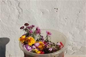 Herbstblumen Für Kübel : schnee und die farben des winters ~ Buech-reservation.com Haus und Dekorationen