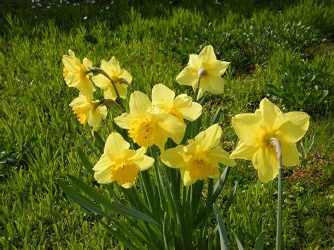 cest le printemps vive le printemps