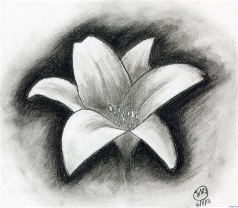 easy charcoal drawings flowers shading pinterest