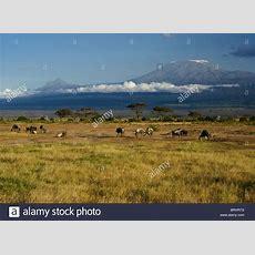 Mount Kilimanjaro And Trees Stock Photos & Mount