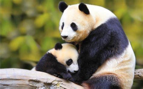 las mejores fotos de animales salvajes imagenes