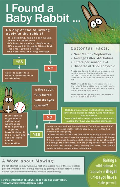 what should you do if you find a baby rabbit den herder vet