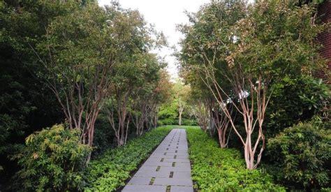 landscape trees landscaping network