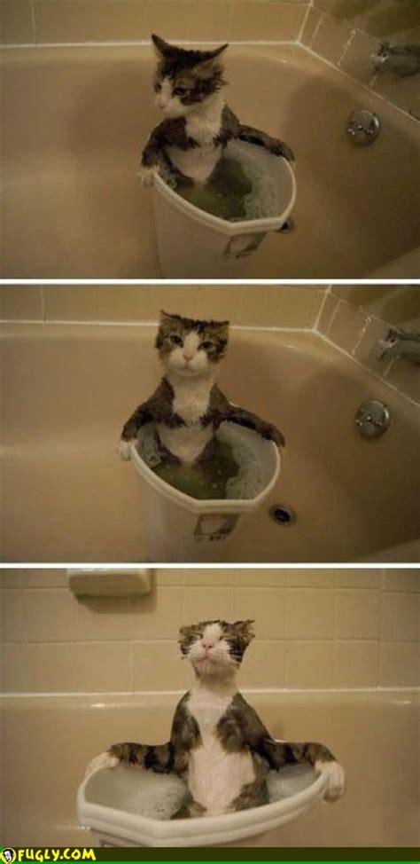 Cat Jacuzzi Fugly
