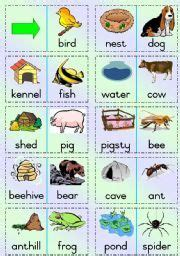 animal homes images animal habitats