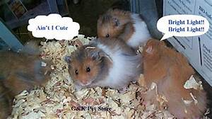 The gallery for --> Cute Hamsters With Guns