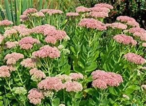 Winterharte Pflanzen Für Balkonkästen : winterharte pflanzen f r balkon und garten ~ Orissabook.com Haus und Dekorationen