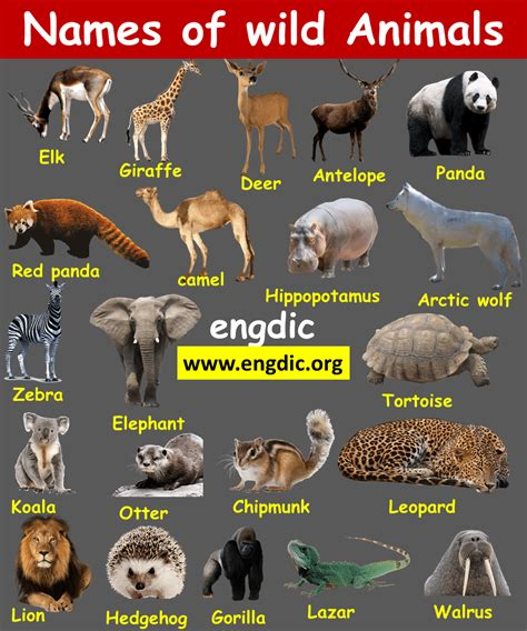 Names Of Domestic And Wild Animals With Pictures
