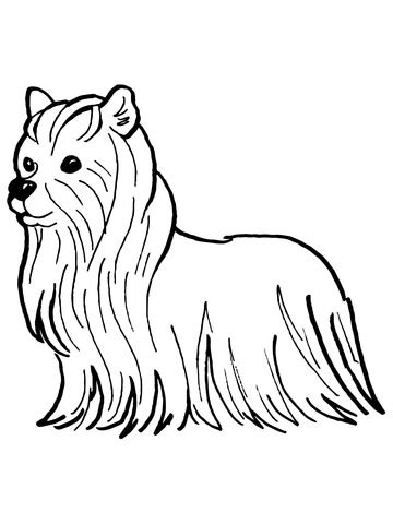 yorkshire terrier coloring page supercoloringcom